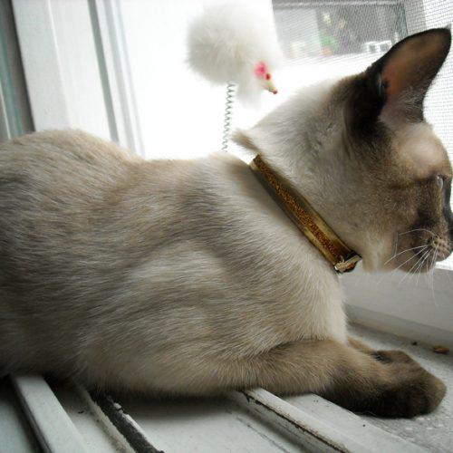 thai katt 2