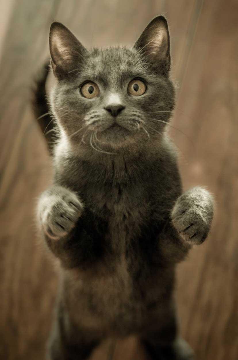 duscha katt